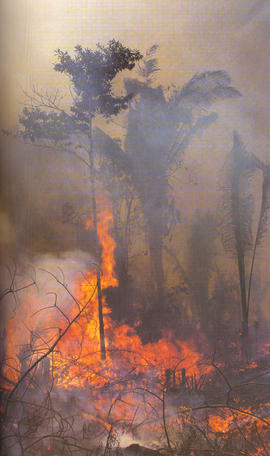 As Queimada da Amazônia (The fires of the Amazon)